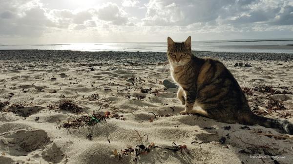 Le chat de la playa