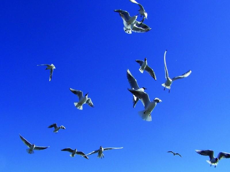 ocells 3
