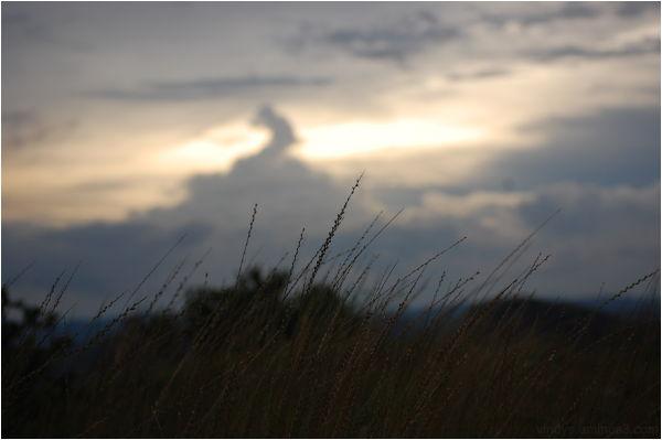 Sunset of grass