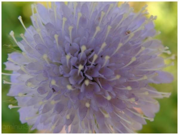 fleur,nature