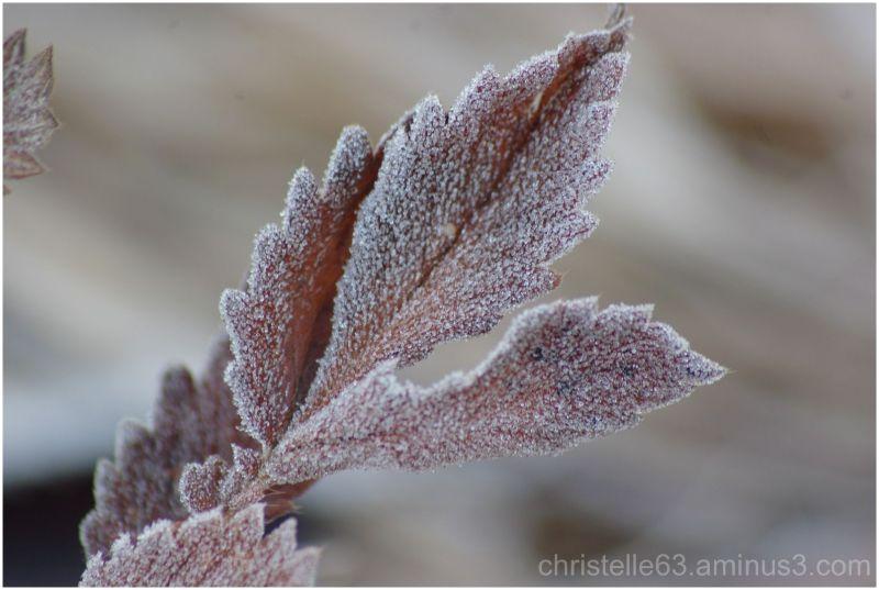 givre, hiver gelée