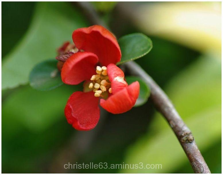 une toute petite fleur