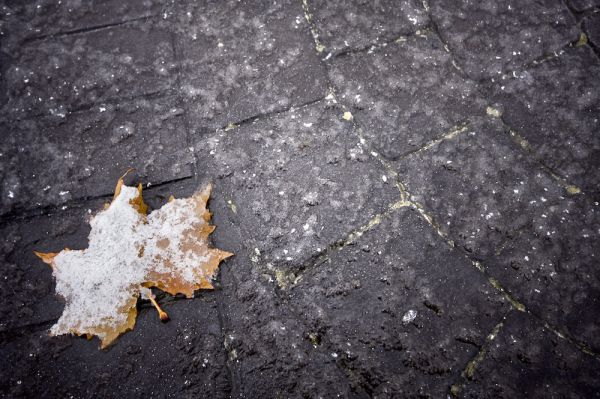 Hoja seca tras una nevada