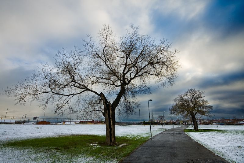 Árbol seco en medio de una nevada, en el Campus