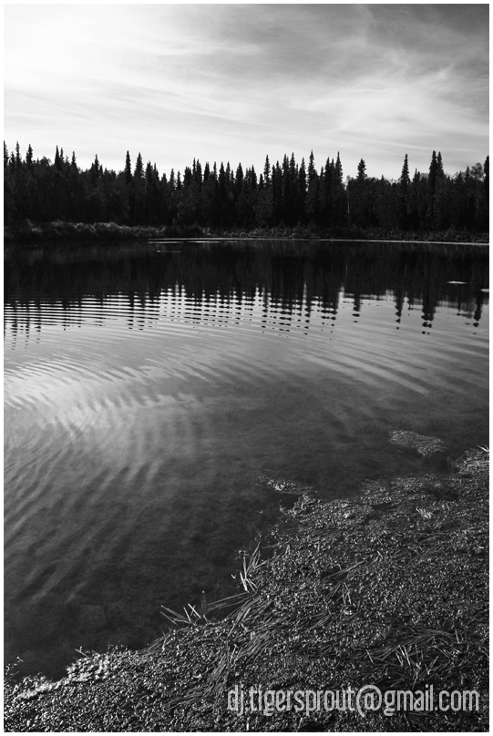 At Water's Edge (Central Alaskan Wilderness)
