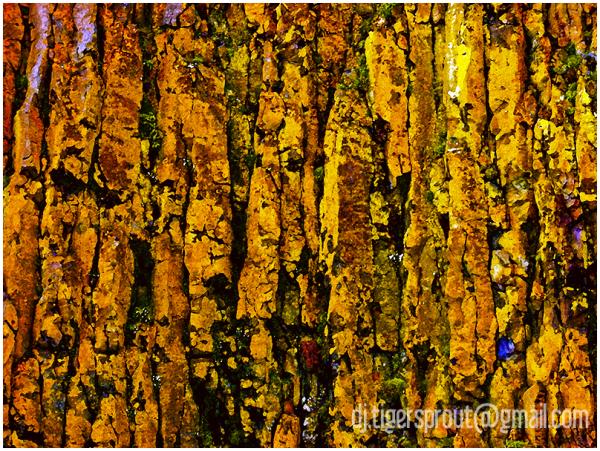Basalt Columns & Yellow Lichen