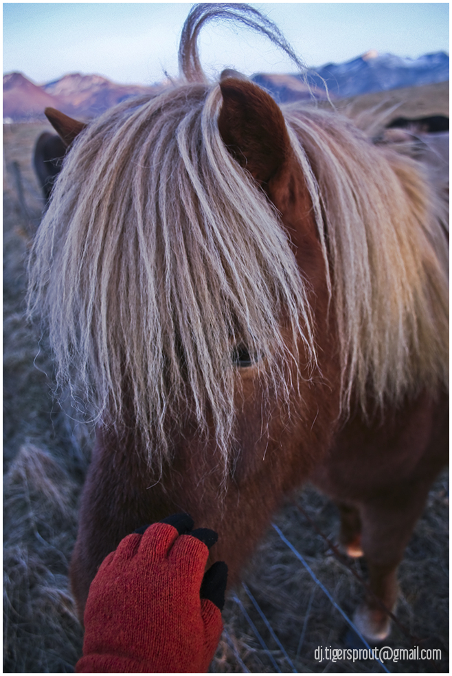 Making Friends, Southern Pastoral Iceland
