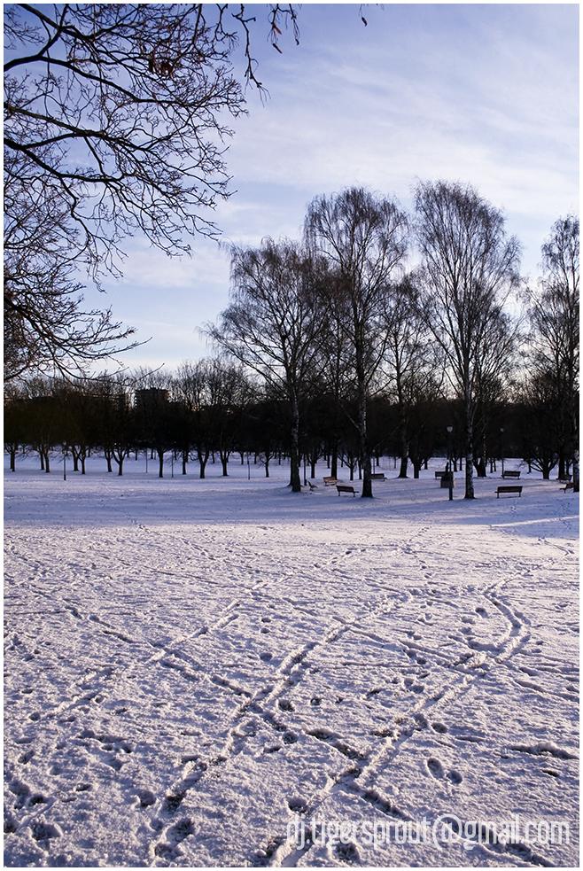 Ice & Barren Trees, Vigeland Park, Oslo