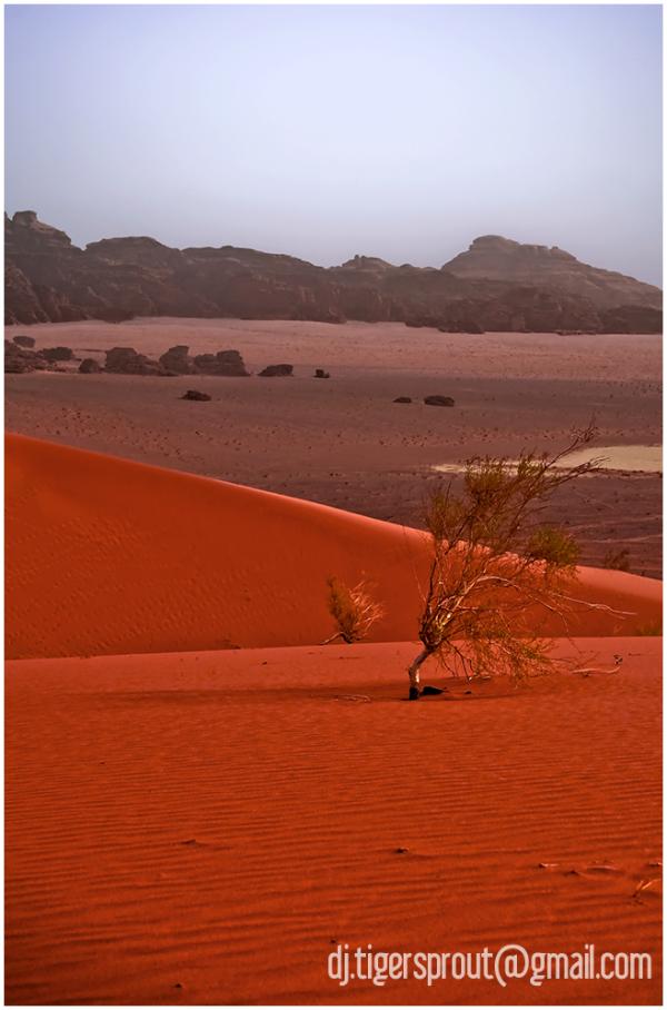 Red Sand Dune Dreaming, Wadi Rum, Jordan
