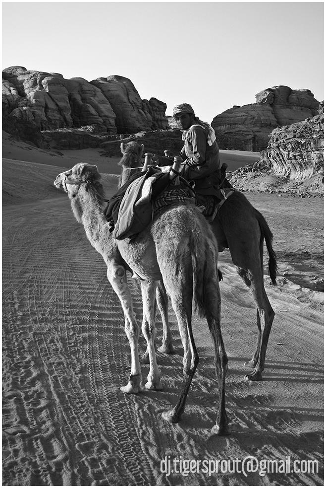 Bedouin Offering Camel Rides, Wadi Rum, Jordan