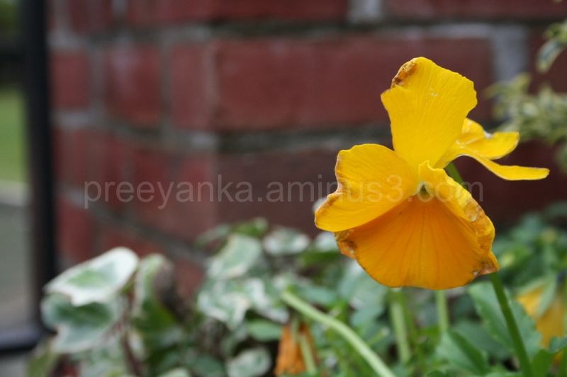 Yellow Flower #3