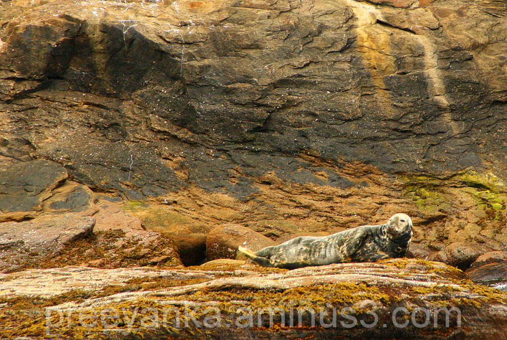 Seal on the rocks