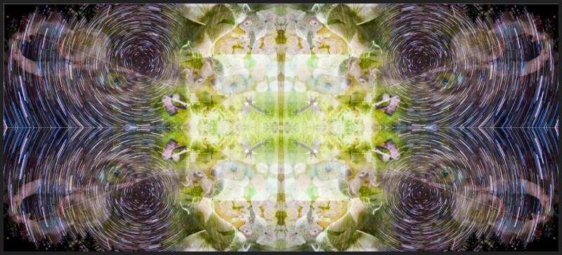Hyner's Collage