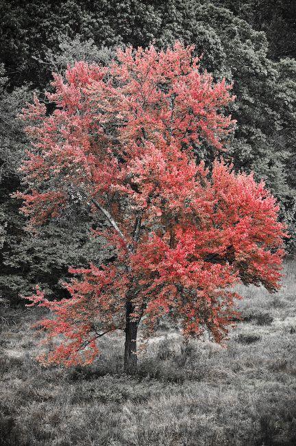 HCS Tree
