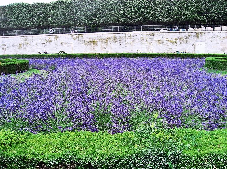 Alfazemas num jardim de Paris