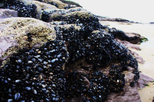 Alive Rocks