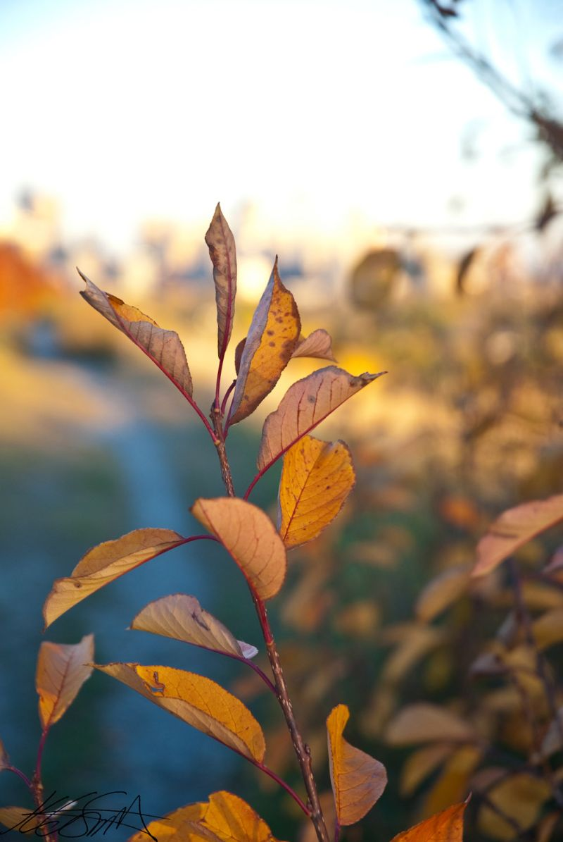 The Autumn Leaves 2