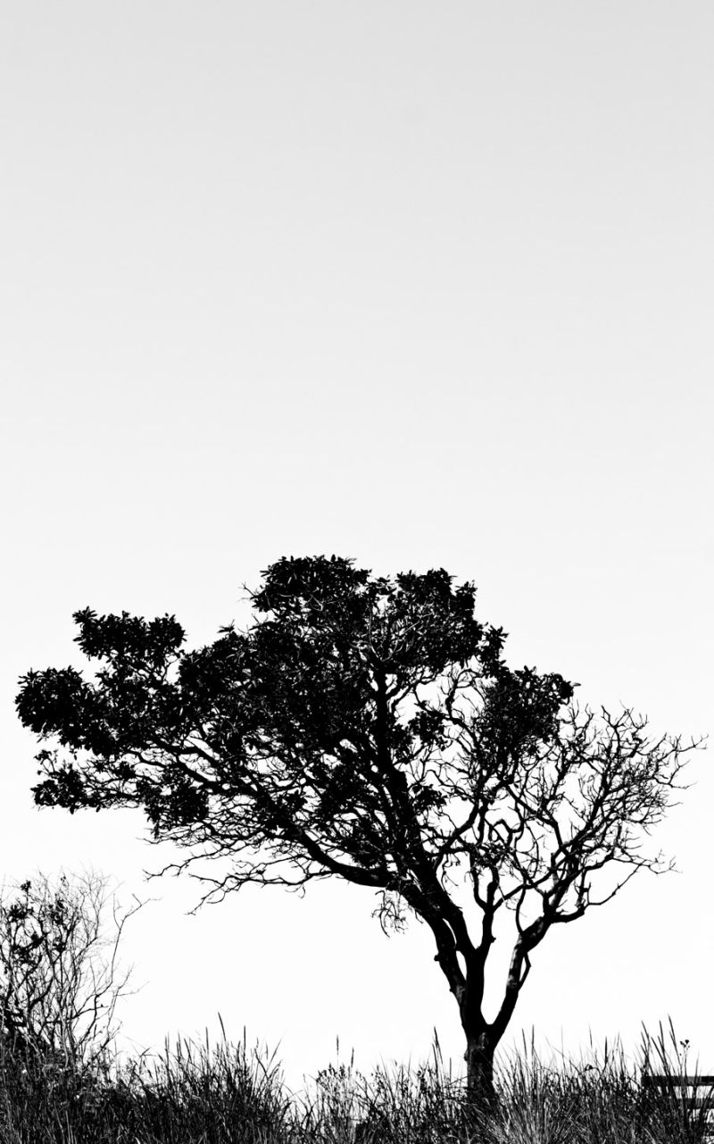 The Tree Stands Alone