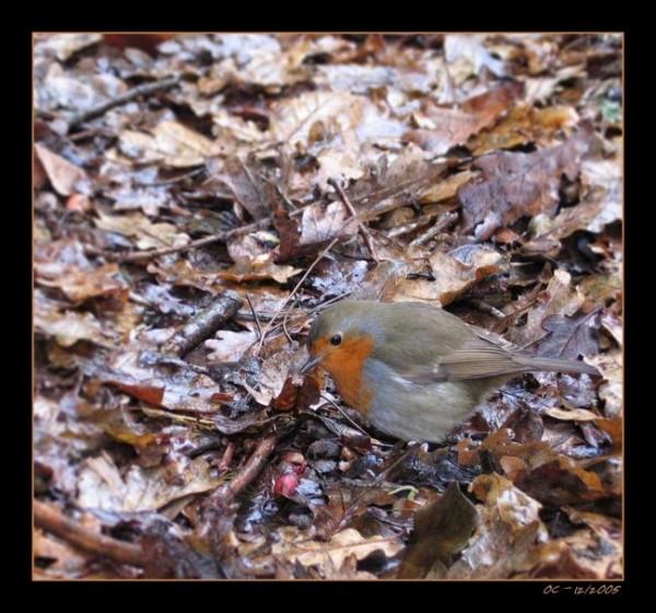 Little bird in winder