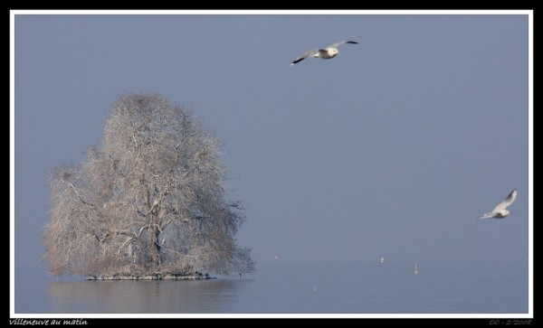 villeneuve, the tree in the lake, Switzerland