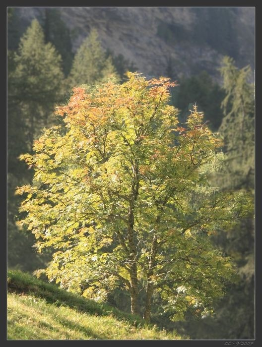 the tree light on a tree