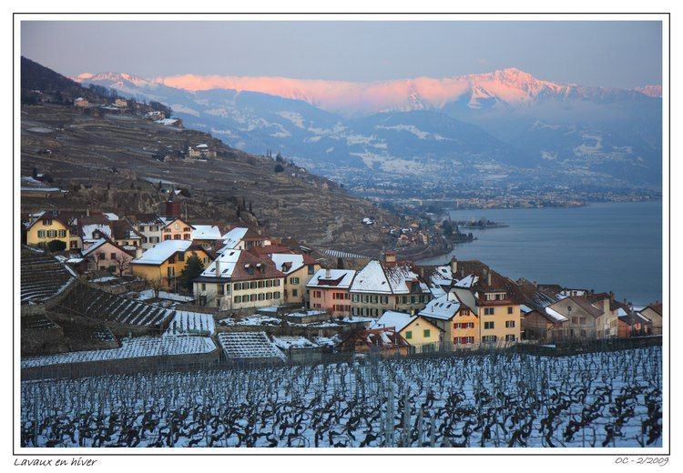 Wineyards of Lavaux in a winter evening magical li