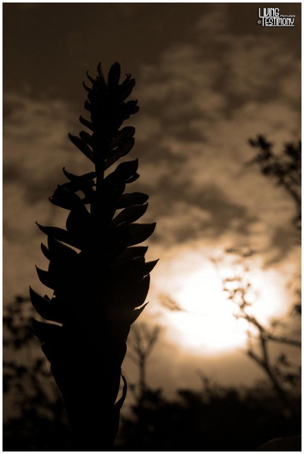 sunny silhouette