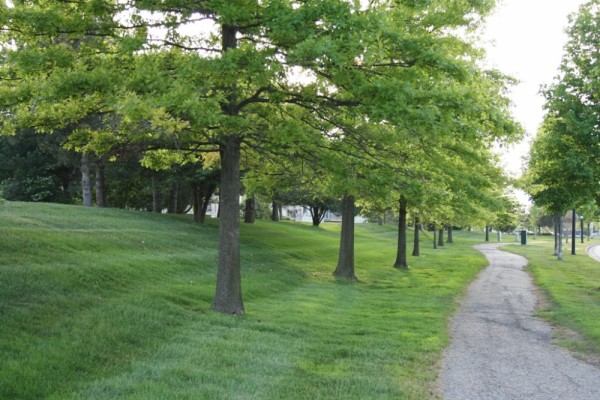 Walk with the trees