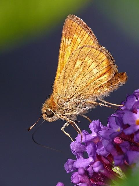 Mignon papillon !