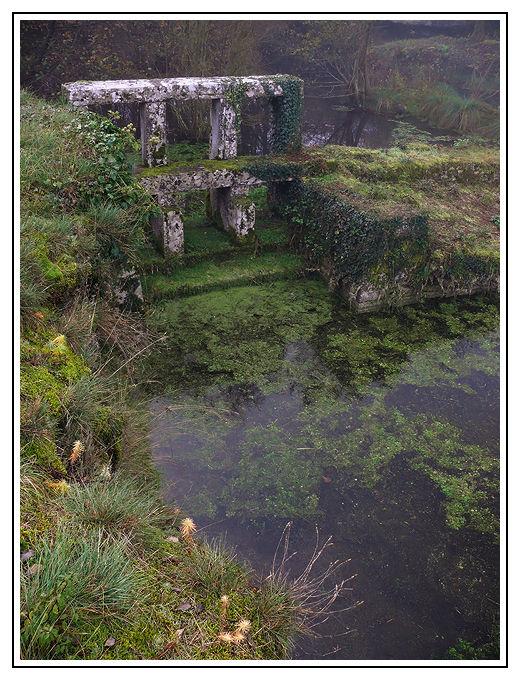 L'étang dans le brouillard (1)