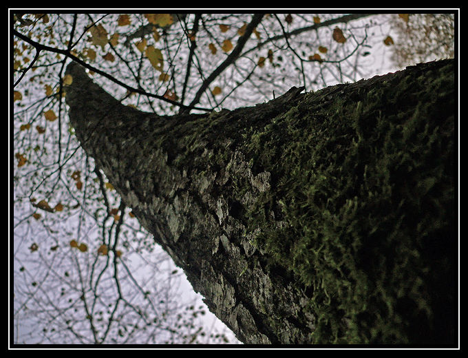 En regardant les branches