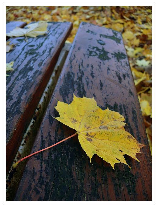 feuille automne banc