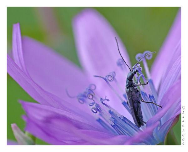Violet et bleu