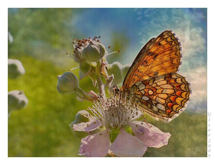 Papillon et chatons de noisetier