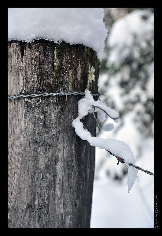 Le chemin sous la neige (5)