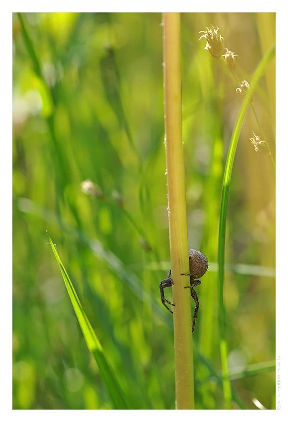 Scène de chasse sur pissenlits (5)