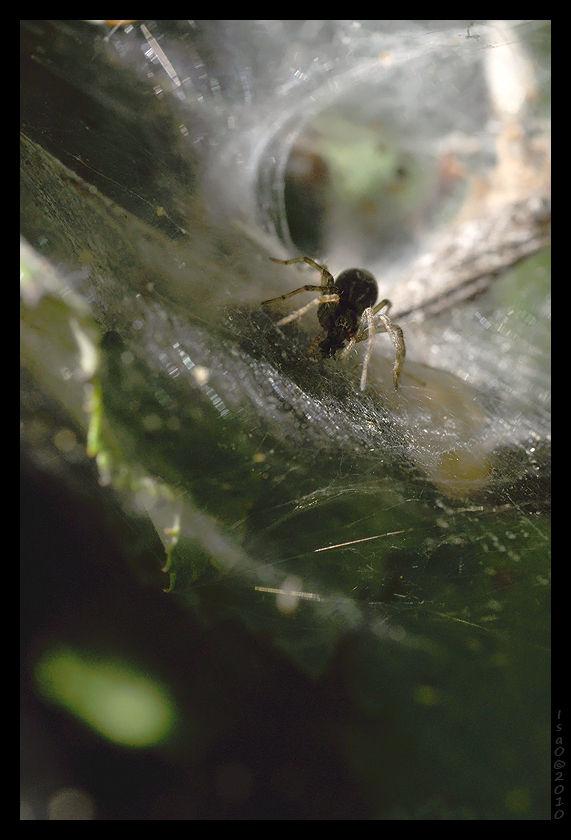 L'antre de l'araignée