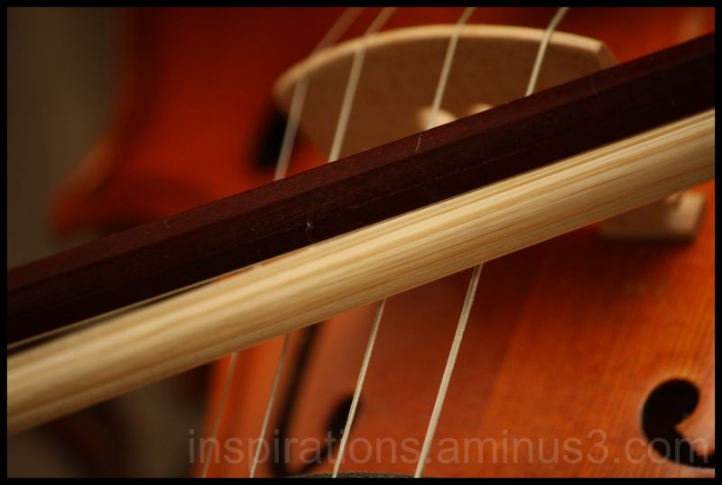 bows and strings of vioin