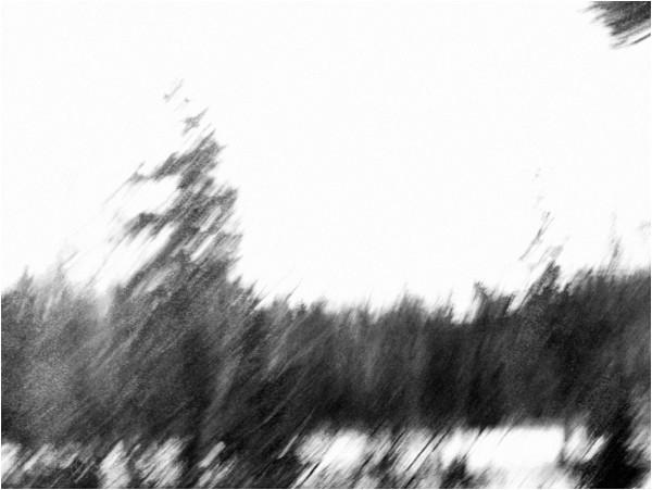trees image field of blurred b&w roamin