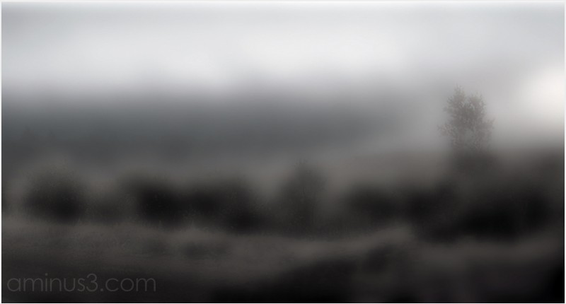 fog diffuse light focus bokeh panorama tree field