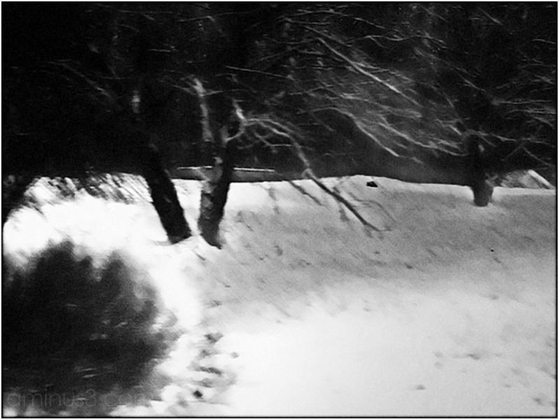 tree snow brush blackwhite b&w blur grain abstract