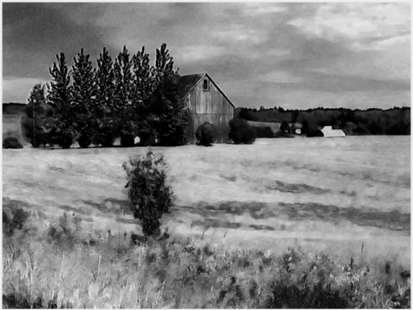 harvest hay farm field barn trees countryside b&w
