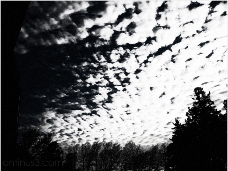 trees sky cloud roofline dark night composite