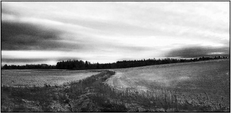 brook swail feilds tree sky rural cold damp roamin