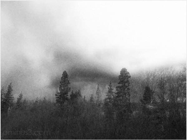 treeline stormclouds evergreen aspen spruce roamin