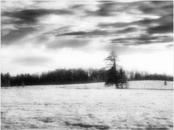 field fenceline windbreak clouds shimmering sky