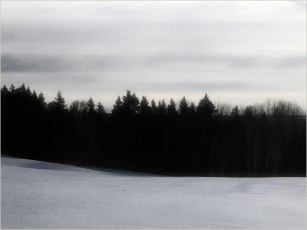 winter treeline field grey-sky flat-light roamin