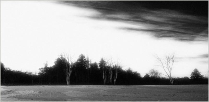 daybreak field treeline evergreens birch roamin