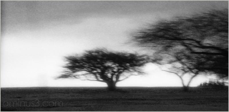 rain wind windswept cold trees orchard roamin