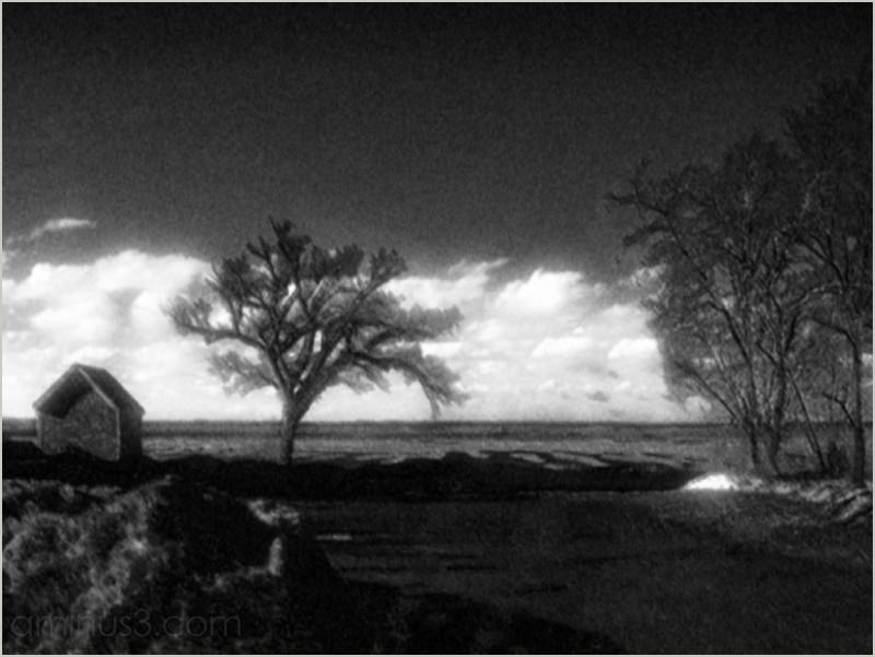 evening elms shed marshlands long-shadows roamin